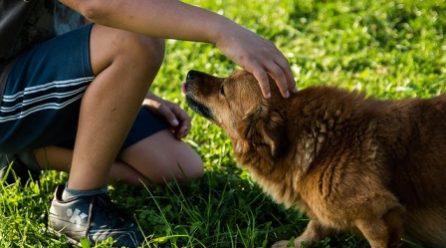 Gyerekek félreértelmezhetik a kutyák reakcióit